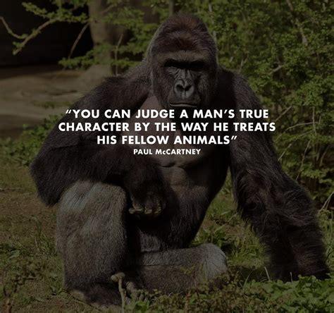 times      gorilla mum herfamilyie