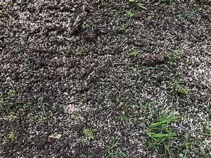 Wann Keimt Rasen : rasen s en wann ist denn der richtige zeitpunkt ~ Lizthompson.info Haus und Dekorationen