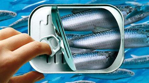 les sardines en boîtes fêtent leurs 200 ans