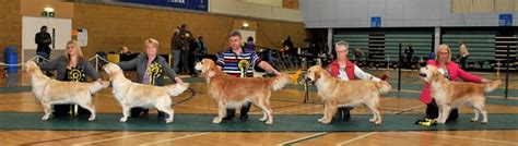 CHAMPIONSHIP SHOW RESULTS 2014 | Southern Golden Retriever ...