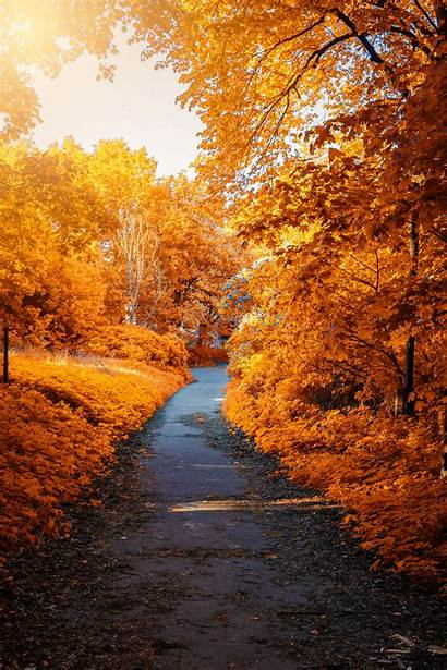 Path Autumn Park Foliage