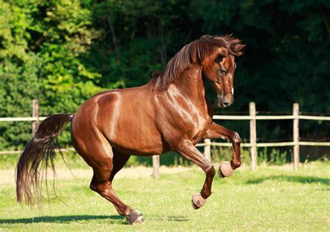 marstall premium pferdefutter