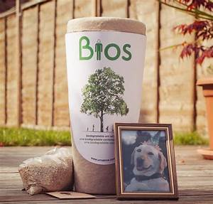 Hund Im Garten Vergraben : beagle lebenserwartung lebensdauer ~ Lizthompson.info Haus und Dekorationen