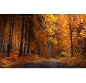 Landscape Nature Fall Forest Road Yellow Trees