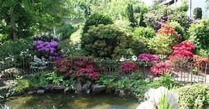 Bäume Für Den Garten : pflanzen f r den rhododendrongarten mein sch ner garten ~ Lizthompson.info Haus und Dekorationen