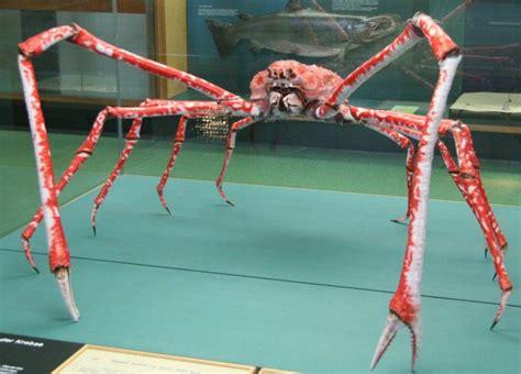 Ee  Japanese Ee   Spider Crab Weneedfun