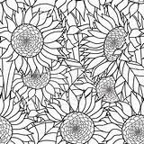 Coloring Sunflowers Adults Bouquet Vector Sunflower Hand Abstract Seamless Adult Illustration Zentangle Drawn Flowers Clip Ornament Tattoo Illustrations Bohemia Pen sketch template