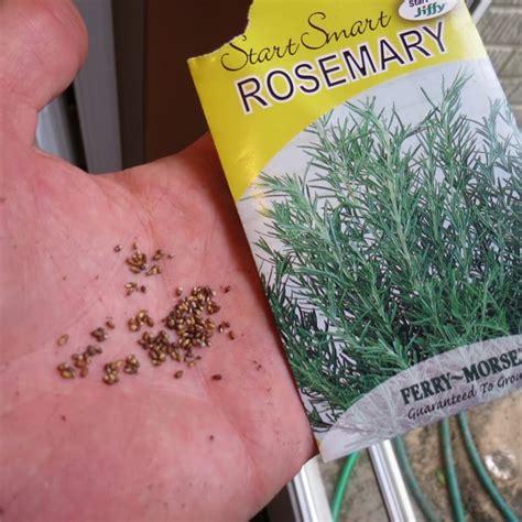 come coltivare il rosmarino in vaso il rosmarino in vaso aromatiche come coltivare il