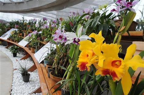 Como Criar Um Orquidário Natural | Flores - Cultura Mix