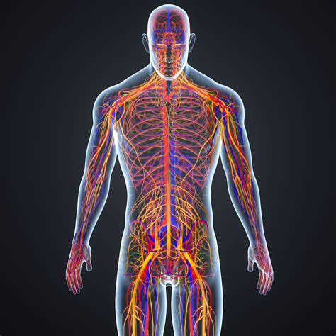 Periferik Sinir Sistemi Hastalıkları Cerrahisi - Ağrı ...