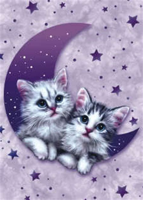 star cute kittens fan art  fanpop