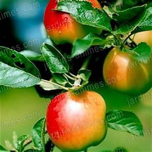 Conservation Des Poires : ph romone carpocapse pommes poires 2 capsules ~ Melissatoandfro.com Idées de Décoration