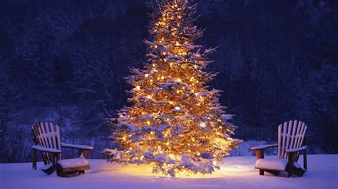 christmas tree snow winter hd wallpaper of christmas hdwallpaper2013 com