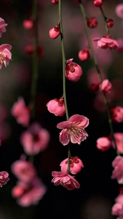 Spring Iphone Wallpapers Flowers Pink Blossom Phone