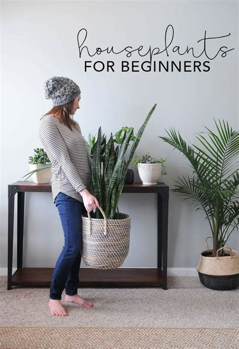 indoor house plants    house plants alive easy