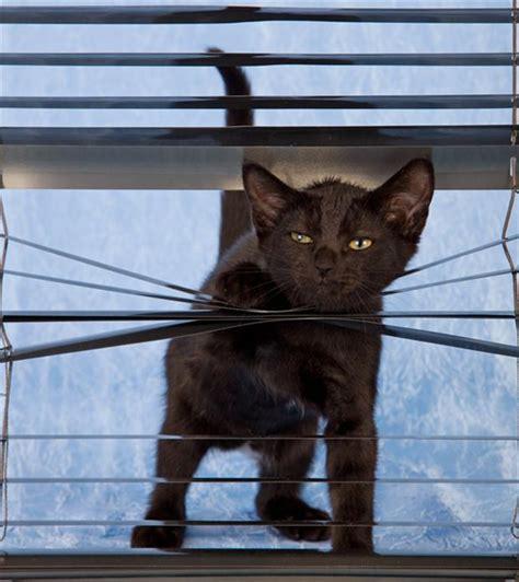 cats   blinds  pics