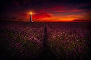 Dark Sunset over Lighthouse and Lavender Field 5k Retina ...