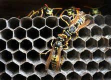 Wespennest Im Boden : wespen nest stockfoto bild von bienenstock nest wespe 36498920 ~ Whattoseeinmadrid.com Haus und Dekorationen