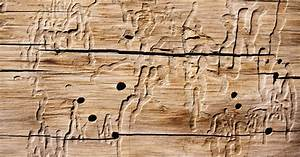 Holz Versiegeln Gegen Wasser : mittel gegen holzwurm awesome hg x gegen holzwurm holz ~ Lizthompson.info Haus und Dekorationen