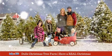 christmas tree farms near indianapolis dull s tree farm get real and cut your own tree