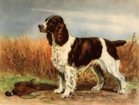 english springers spaniel pictures beresford english
