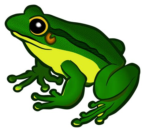 Frogs Clipart Clipart Frog Coloured