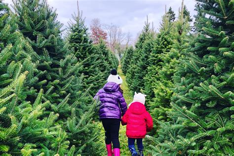 christmastree farms philadelphia 20 tree farms near philadelphia where you can buy a tree