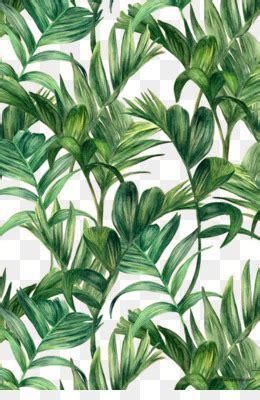 daun  gratis daun hijau listrik lengkungan