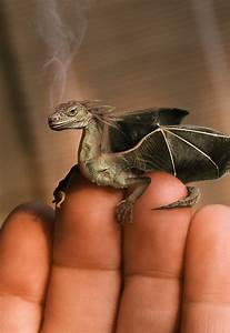 Baby Dragon Photographed in Indonesia | BizarBin.com