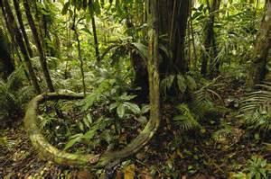 Amazon Rainforest - Half of Worlds Rainforest ~ - DesiRulez.ME