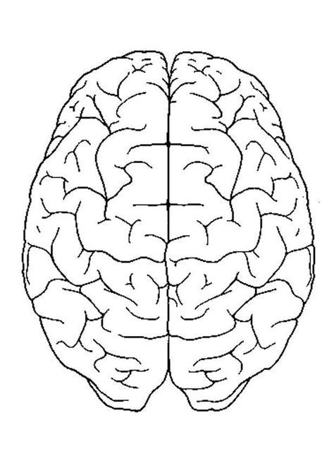 Hersenen Kleurplaat by Kleurplaat Hersenen Boven Afb 4300 Images