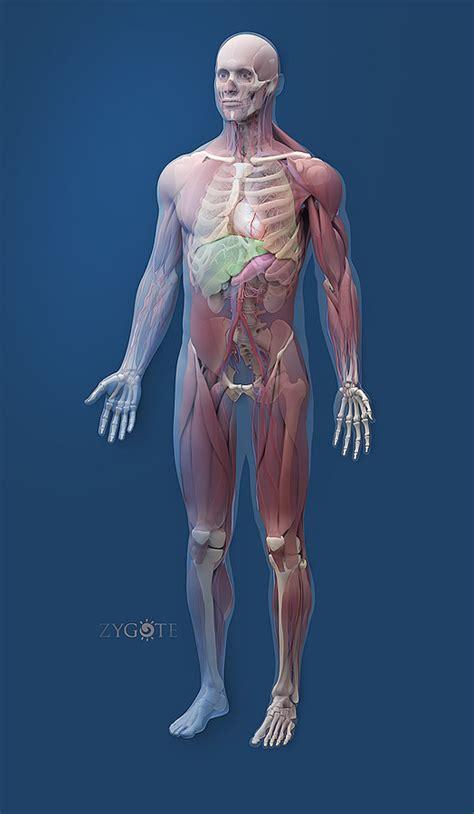 Human Body 3d Anatomy Free Download Baldaivirtuvesinfo