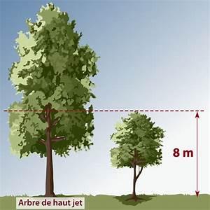 Arbre à Croissance Rapide Pour Ombre : choisir un arbre am nagement de jardin ~ Premium-room.com Idées de Décoration