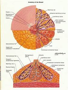 Pin On Gynaecology And Obstetrics