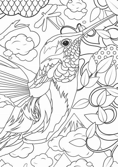 Coloring Pages Adult Animals Humminbird Adults Animal