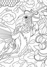 Coloring Pages Adults Animal Humminbird sketch template