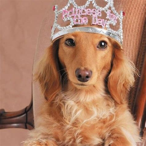 dogs galore blank greeting cards images