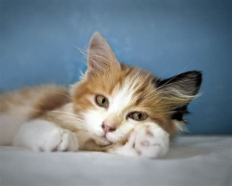 Cat Calmer Spray