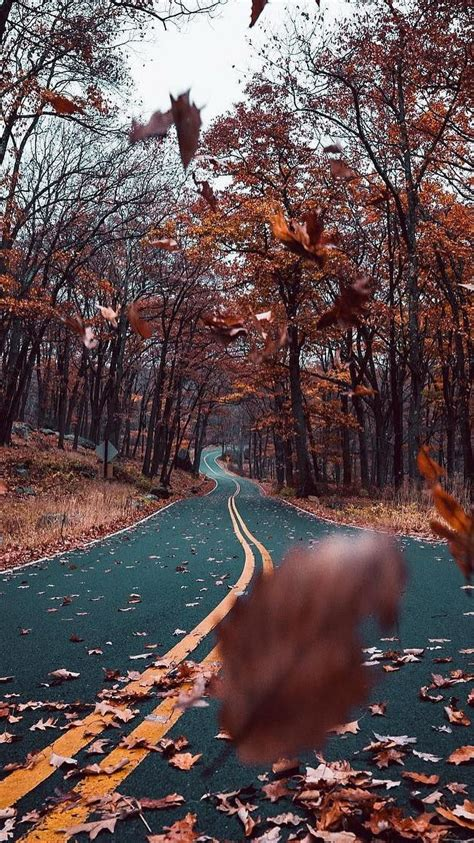 autumn road nature beautiful iphone wallpaper iphone