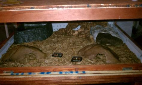 Custom Reptile Cage How To Operate A Hoover Steamvac Carpet Cleaner Stretching Fort Worth Tx Bonnet Cleaning Process Unlimited Owensboro Ky Dry Foam Method United Red Club Dulles Airport Frey Albion Ne Best Solution For Set In Stains
