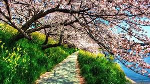 Spring Nature Photos