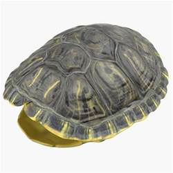 turtle shell 3d turtle shell