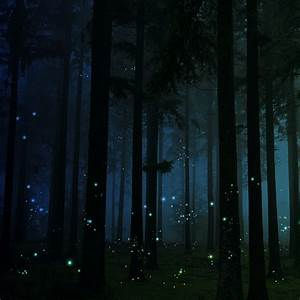 firefly forest | for inspiration theme week, so glad you ...
