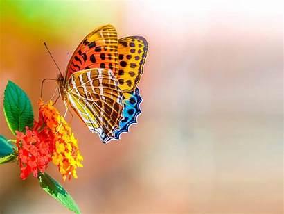 4k Ultra Flower Desktop Flowers Colorful Butterfly