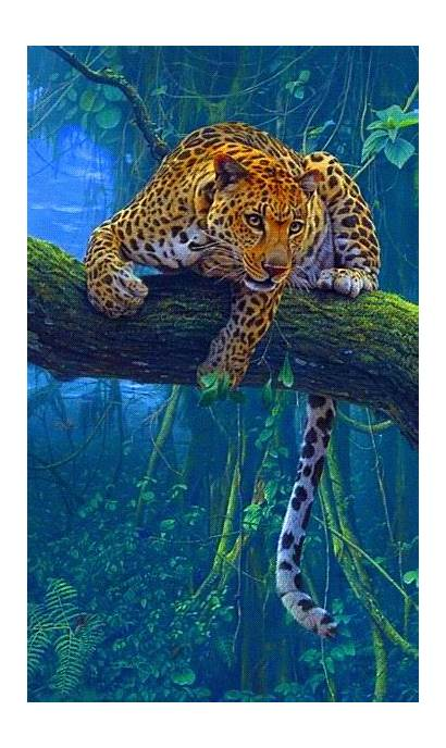 Jungle Tiger Giphy Cats Gifs Wild Animals