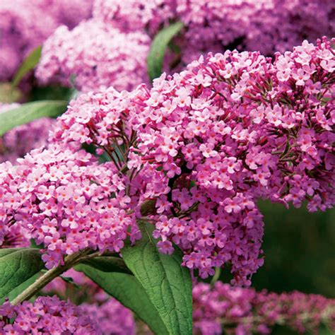 popular outdoor plants best flowers for bees butterflies sunset