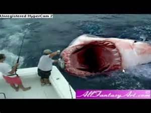 Real Scary Shark