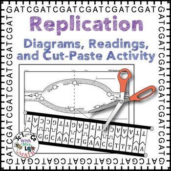 dna replication activity diagram  reading  high