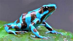 10 Most Beautiful Frogs On Planet Earth