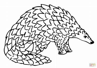 Pangolin Drawing Coloring Giant Clipart Pages Printable